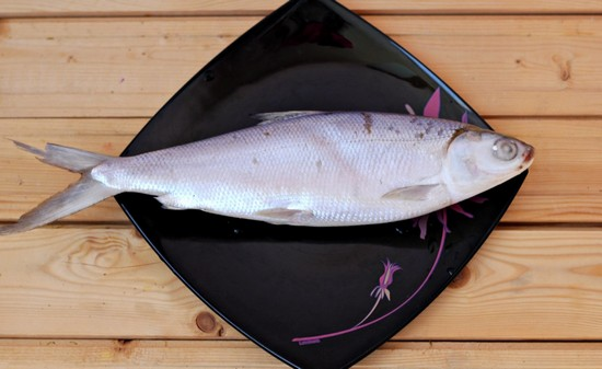 Молочная рыба: польза и вред